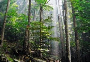 Deep Woods Hideout. Photo Credit Courtesy of Snežana Trifunović GNU Free Documentation License.Free Software Foundation