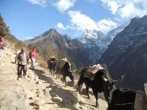 Nepal Yaks And Porters Photo Credit: Courtesey: Krish Dulal CC creative commons.